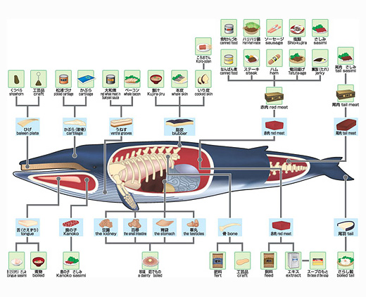 Chart of whale derived products - hump back whale