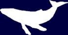 Cetacean Team Logo